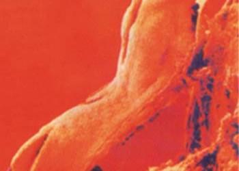 bloedklonter 1
