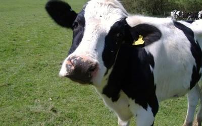 melkvorming-van-vee
