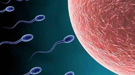 sperma-en-eicel