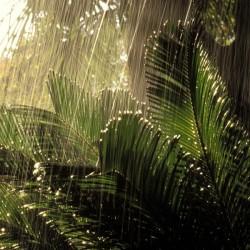 Het regent elk jaar met dezelfde hoeveelheid